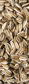 seed01